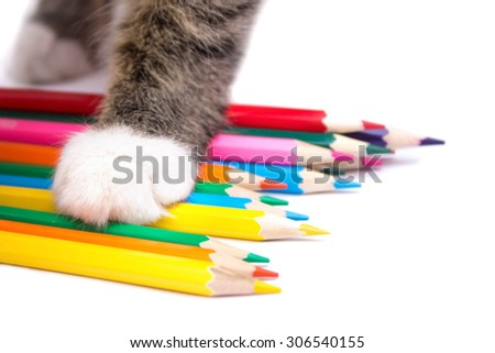 cat paw on colored pencils - stock photo
