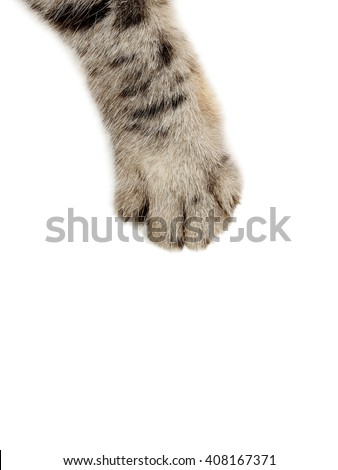 Cat paw on the white background - stock photo