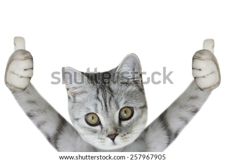 cat paws up - stock photo