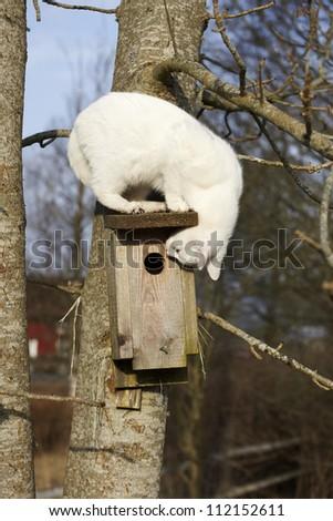 Cat peeking in birdhouse - stock photo