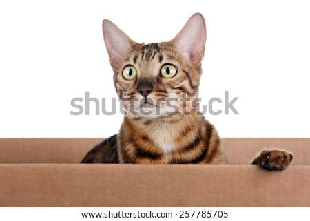 Cat peeking out of the box - stock photo