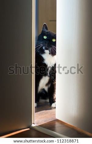 Cat peeking through the door - stock photo