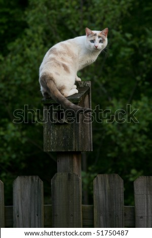 Cat Perched on a Bird House - stock photo
