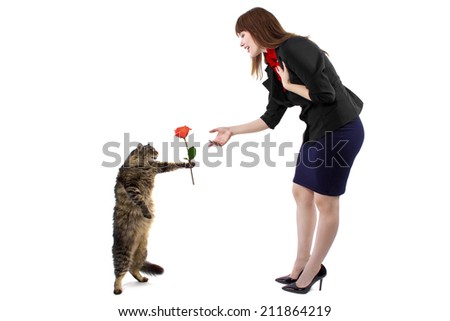 cat performing a trick standing up in front of owner - stock photo