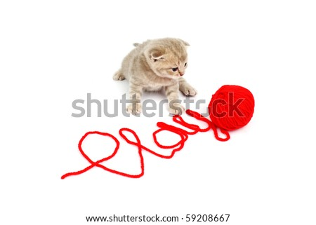 cat  play in red wool - stock photo