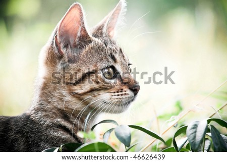 Cat play in the grass - stock photo