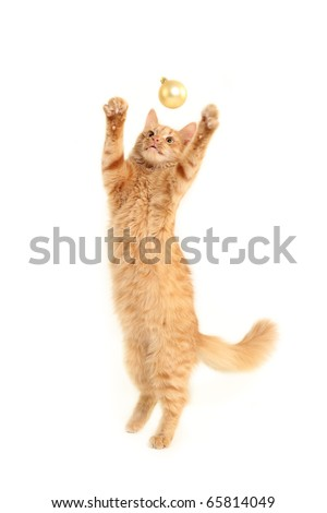 cat play with christmas ball isolated on white background - stock photo