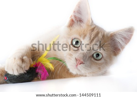 Cat play with mouse - stock photo