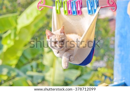 Cat playful in Knit cap hanging - stock photo