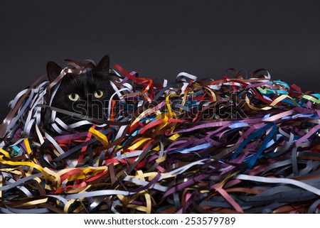 Cat playing in cassette tape - stock photo