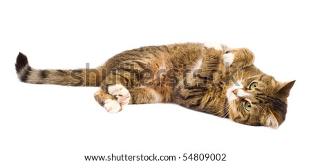 Cat playing isolated