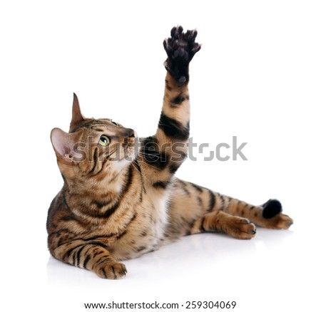cat playing lying on a white background - stock photo