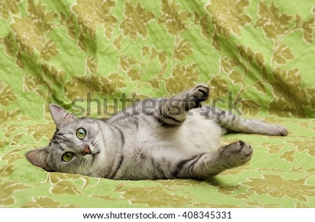 Cat playing on a sofa, looking with pleading stare at the viewer with space for advertising and text, domestic animal