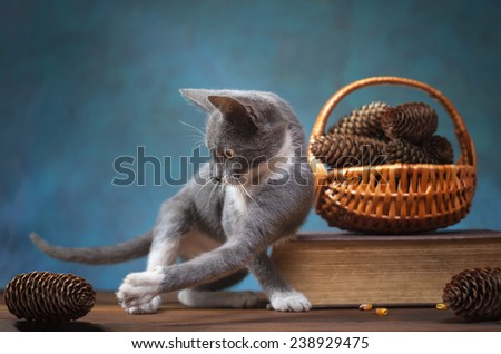 Cat playing on a wooden table