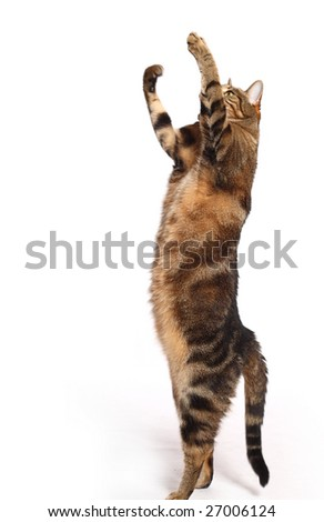 Cat playing on white background - stock photo