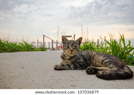 cat playing outside and looking at photographer, series animals - stock photo