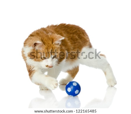 cat playing with a ball. isolated on white background - stock photo