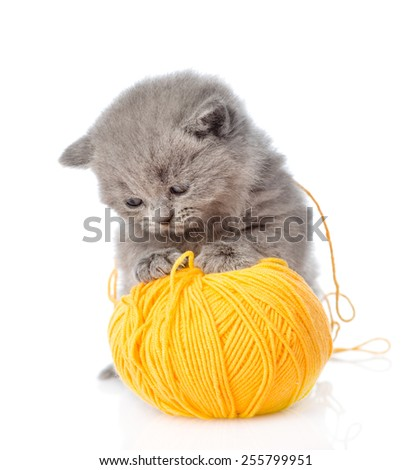 cat playing with a ball of wool. isolated on white background - stock photo