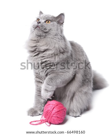 cat playing with clew isolated - stock photo
