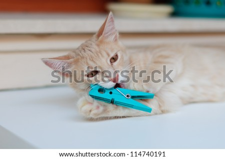 Cat playing with clothes peg - stock photo