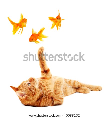 Cat playing with goldfishes - stock photo