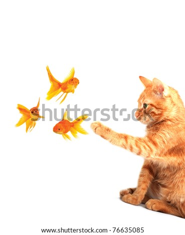 Cat playing with goldfishes isolated on white background - stock photo