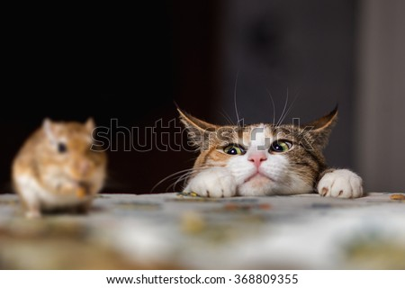Cat playing with little gerbil mouse on the table - stock photo