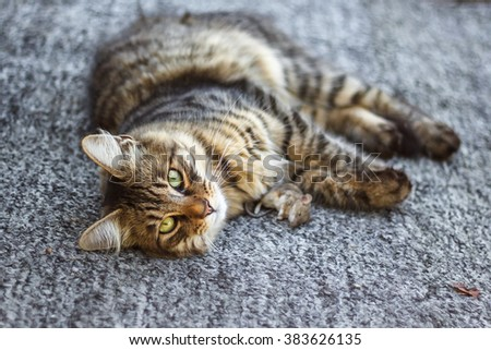 cat playing with mouse on the farm - stock photo