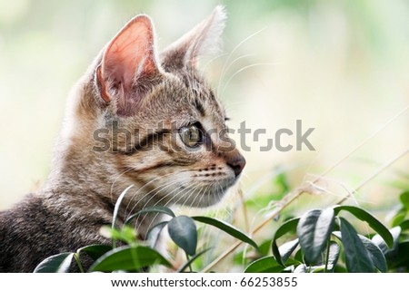 Cat plays and hides  in the grass - Hidden cat in natural environment - stock photo