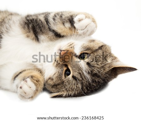 cat plays on a white background - stock photo