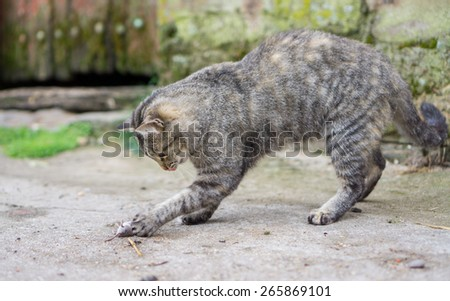 Cat plays with haunted mouse - stock photo
