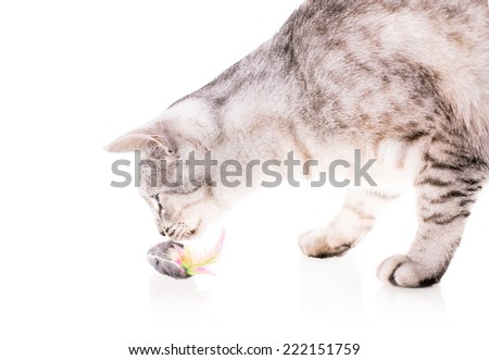 cat plays with the mouse isolated on white background - stock photo