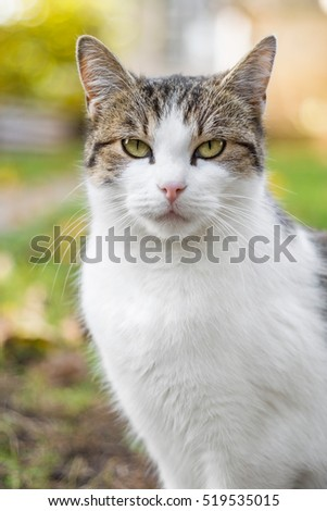 Cat portrait in autumn against blurry background