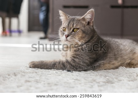 Cat Portrait in House - stock photo
