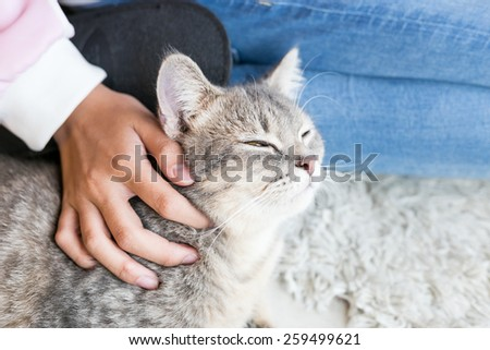 Cat Portrait in House with hand