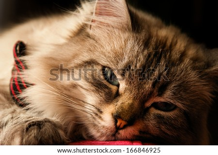 Cat portrait in natural light - stock photo