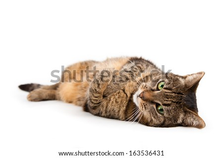 Cat portrait isolated on white