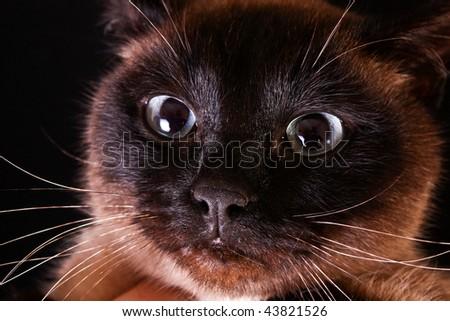 Cat portrait on black background - stock photo