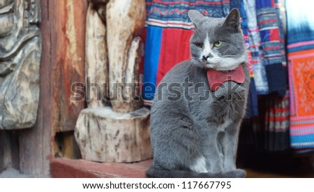 cat pose sit on the shop look around like watch dog - stock photo
