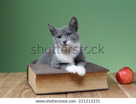 Cat posing for the book in the studio and  wooden table - stock photo