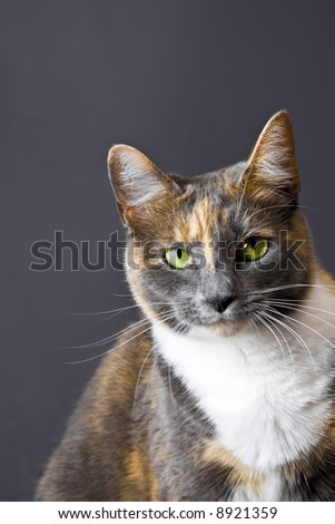 Cat posing for the camera in a studio