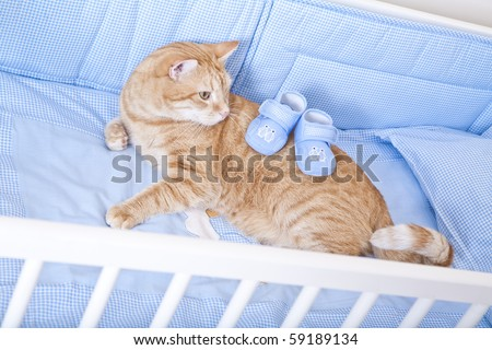 Cat prepared for the birth of a child