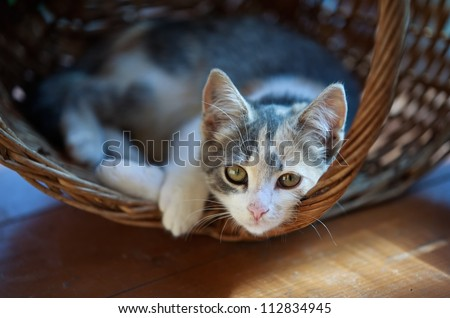 Cat pretty - stock photo