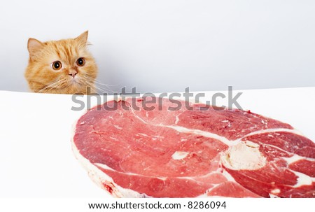Cat reach the meat and ready to feast