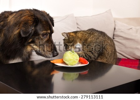Cat reaches for vegetables on a plate, while a dog is watching - stock photo