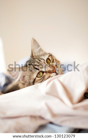cat relaxes and dreams on a bed - stock photo