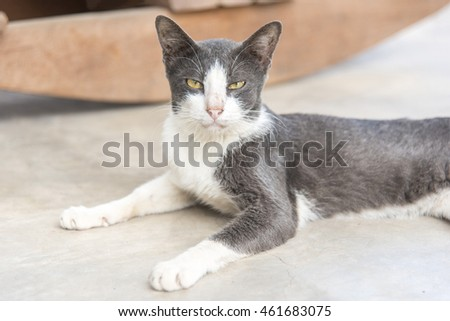 cat relaxes on the floor, shallow focus