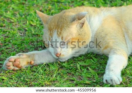Cat Relaxing - stock photo