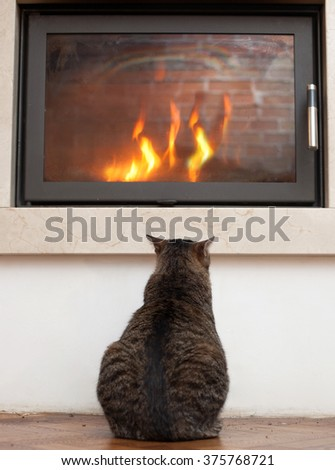cat relaxing by the fire  - stock photo