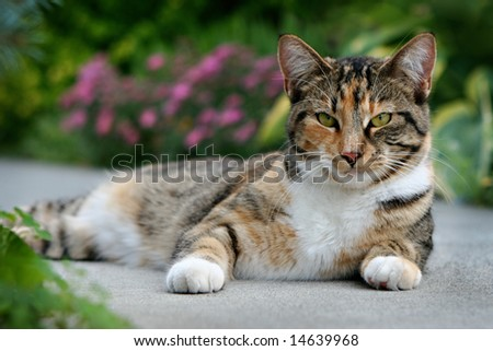 Cat Relaxing on a Path - stock photo